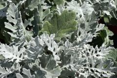 Silverdust